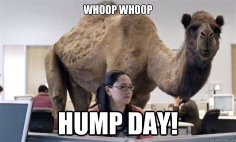 Camel Meme - hump day meme camel www imgkid com the image kid has it