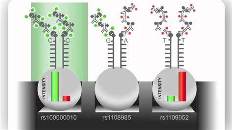 bead chip illumina advances genomic research with the infinium assay
