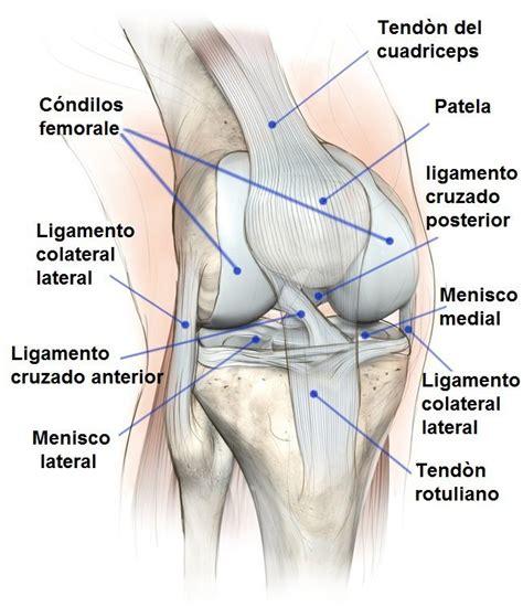 dolore ginocchio parte interna lesi 243 n menisco de la rodilla interno o externo cirug 237 a
