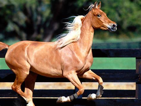 imagenes surrealistas de caballos imajenes de caballos imagui