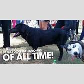 10 Best Dog Pho...
