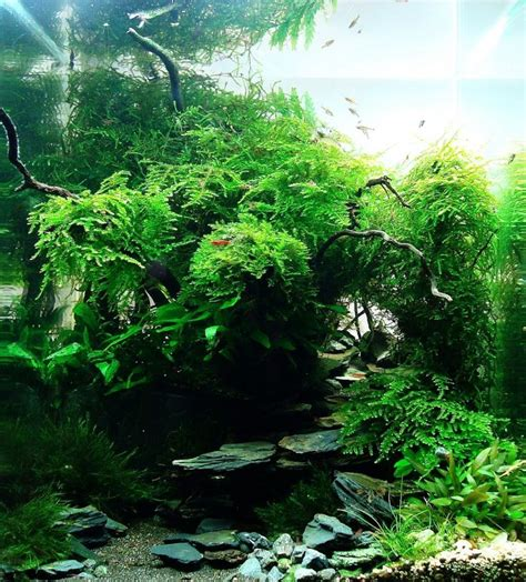 aquascape freshwater aquarium 78 best images about aquascape on pinterest cichlids