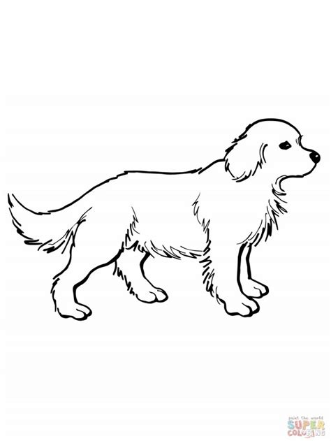 Golden Retriever Coloring Pages by Golden Retriever Coloring Pages Az Coloring Pages
