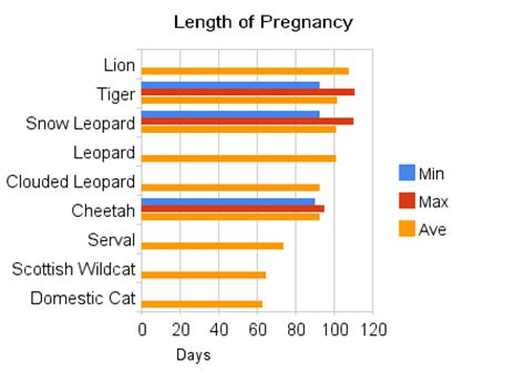 pregnancy length how are cats