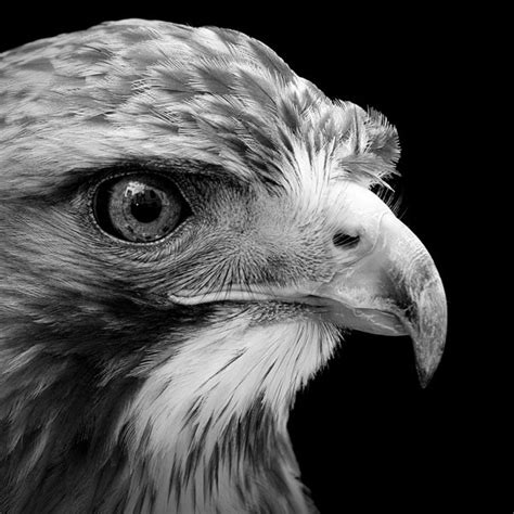 black and white animals black and white animal portraits in breathtaking detail