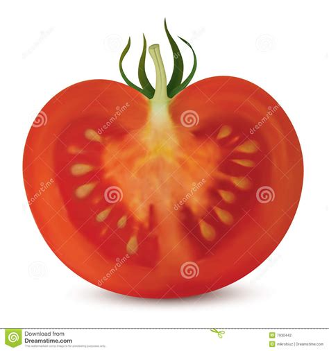 what is vertical haircut tomato vertical cut stock photography image 7930442