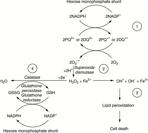 Hydrogen Peroxide Poisoning Detox by Acute Diquat Poisoning With Intracerebral Bleeding