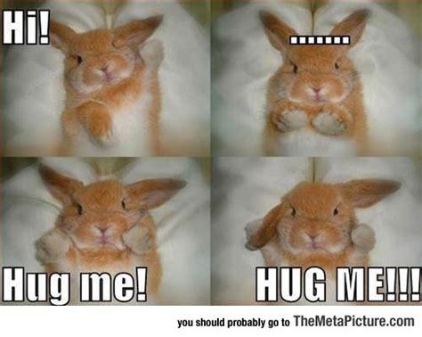 Angry Bunny Meme - angry bunny wants a hug