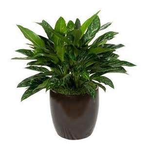 low light indoor plants low light indoor plants www garden design me
