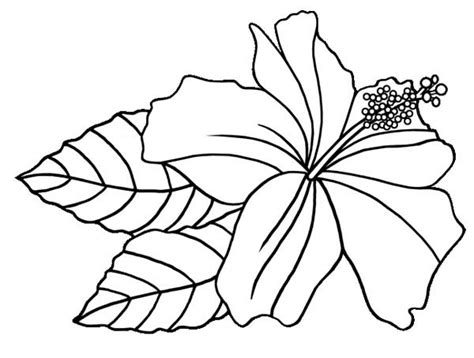 free coloring pictures of tropical flowers hibiscus flower hawaiin hibiscus flower coloring page