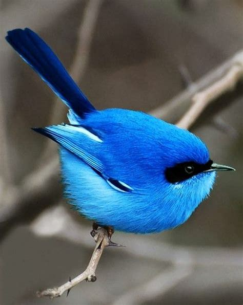 blue colored birds top 10 most beautiful blue colored birds in the world
