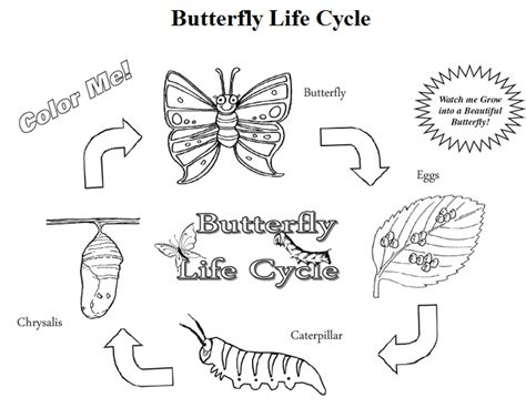 Discount Butterfly Growing Kit Free Butterfly Life Cycle Butterfly Cycle Coloring Page