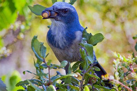 do birds eat nuts yes learn how to feed them