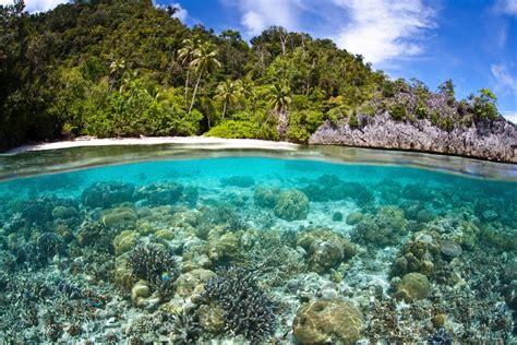 imagenes de hábitats naturales la onu resalta amenazas a la biodiversidad