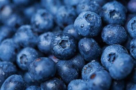 what color are blueberries blue blueberries food fruit healthy image 275586 on