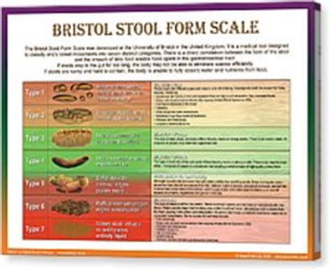 bristol stool form scale digital by galina imrie