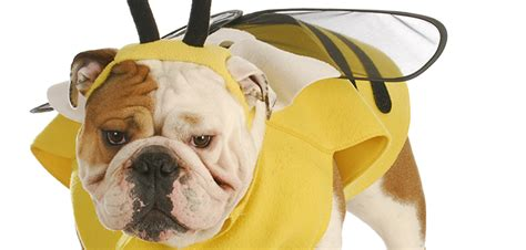 bee stings in dogs dogs and bee stings handling a bee sting on your