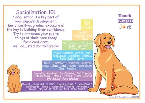 puppy and socialization behavior puppy socialization and habituation green acres kennel shop