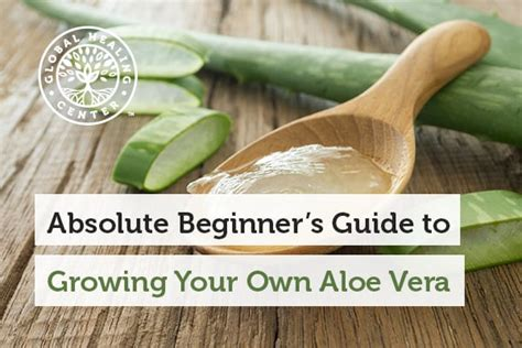 superwellness become your own best healer the revolutionary new formula for creating true vibrant health books absolute beginner s guide to growing your own aloe vera