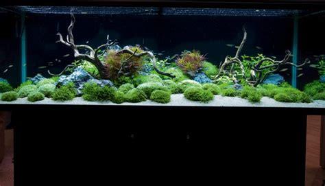 inspirational aquariums contemporary planted tank
