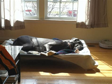 xl dog bed dog beds extra large large breed dog beds dog beds for large dogs dog breeds picture