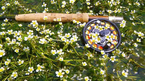 fiori nei cannoni sorgue fr