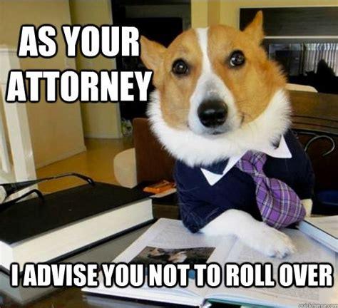 Corgi Lawyer Meme - the best of the lawyer dog meme