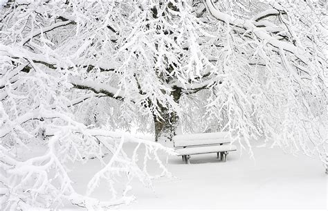 bench snow snow covered bench near snow covered bare tree 183 free stock photo