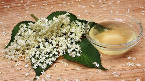 fiore di sambuco ricetta fiori di sambuco in pastella