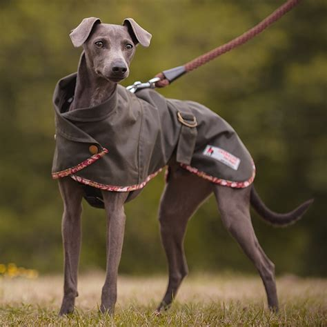 Norfolk Whippet Harness Hole Waterproof Coat - Redhound ...