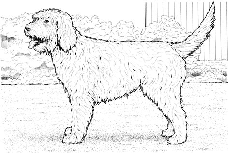 The Beagle Barn Free Coloring Pages Of Perro Pug