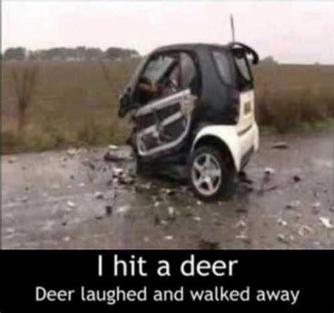 smart car deer the durability of smart cars