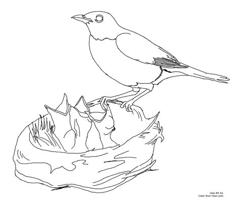 American Robin Coloring Page Coloring Pages Robin Coloring Pages