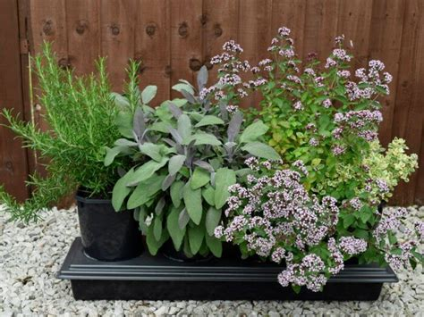 Herb Planters Uk by 4 Pot Herb Planter With Free Seeds