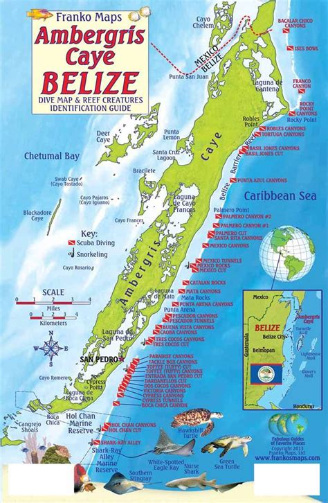 ambergris caye dive resort 1000 ideas about belize diving on belize