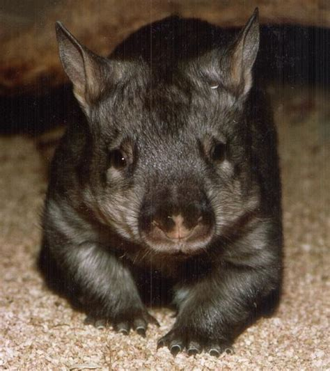 Be Gentle With Me Wombat My Blogtalkradio by Wombat Test Civil Aviation Forum Airliners Net