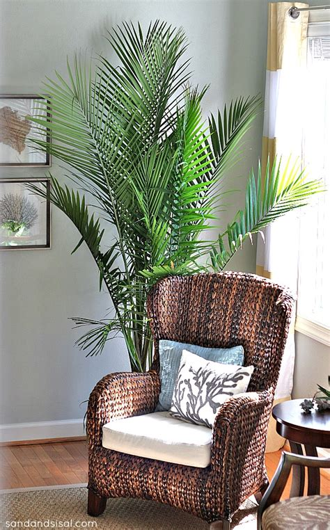 decorative trees for living room 10 houseplants that clean the air page 2 of 11 sand and sisal