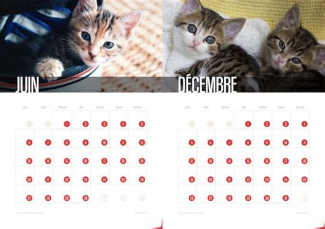 Calendrier Des Chats Calendriers Chats De Chatons 2016 Icalendrier