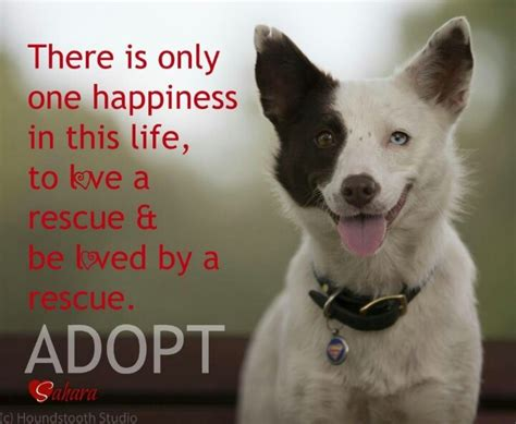 rescue quotes inspirational quotes about animal rescue quotesgram