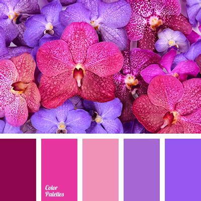 bright crimson color violet color palettes tag color palette ideas