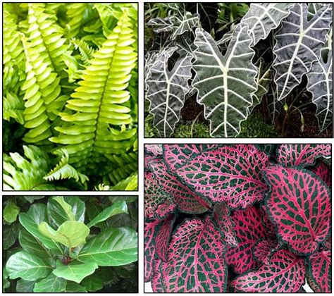 interior plants for houses tropical house plants for your garden room interior design inspiration