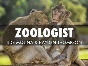 Requirements To Be A Zoologist by Doc 460288 Zoologist Description Zoologist Description 67 More Docs Cakemasti
