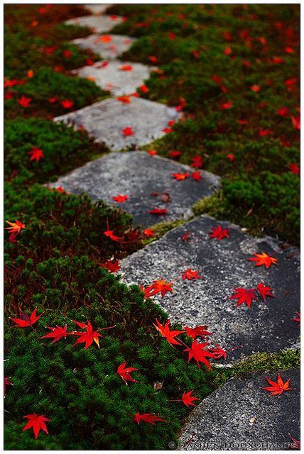 87 best images about moss gardens on pinterest gardens oriental and ferns
