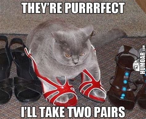 Purrrfect Meme - cat i ll take two pairs humoar com