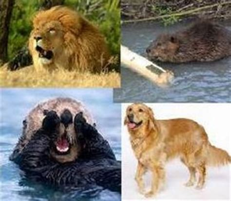 personality test otter golden retriever and beaver personality test soul shepherding