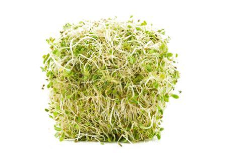 alfalfa images alfalfa png images transparent free pngmart