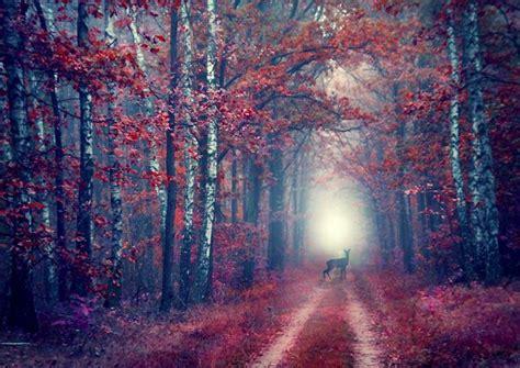 immagini di da sogno le principesse disney immerse in paesaggi da sogno