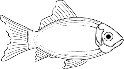 coloring pages of cod fish cod fish white clip art at clker com vector clip art