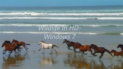 aenimal youtobu davload wildlife in hd windows 7 sle