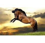 Wallpaper Jumping Horse Strong HD Animals 3000